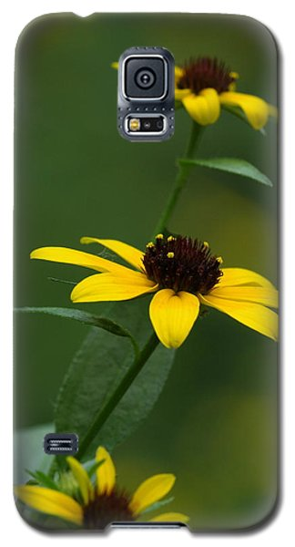 Browneyed Susan Galaxy S5 Case