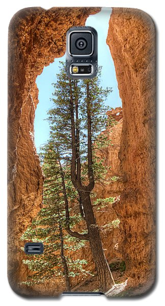 Galaxy S5 Case featuring the photograph Bryce Canyon Trees by Tammy Wetzel