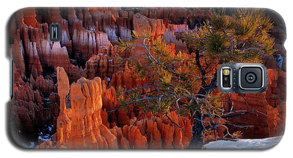 Bryce Canyon Winter Light Galaxy S5 Case
