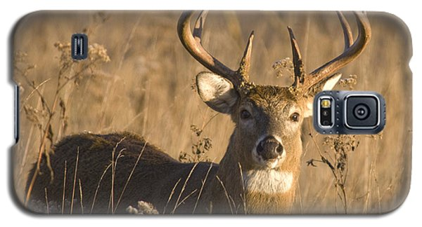 Buck In Field Galaxy S5 Case