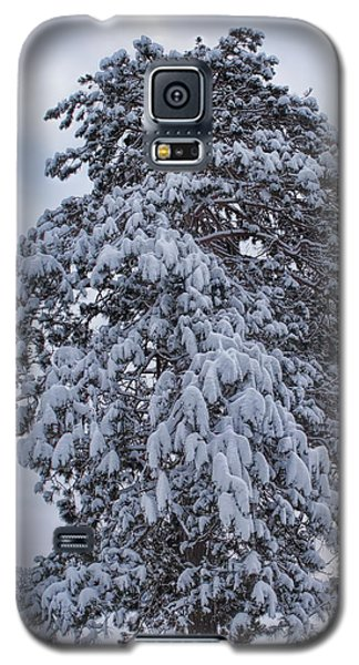 Buck Lake Flocked Pine Galaxy S5 Case