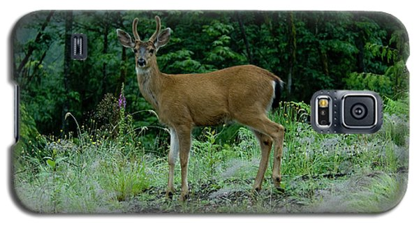 Galaxy S5 Case featuring the photograph Buck by Rod Wiens