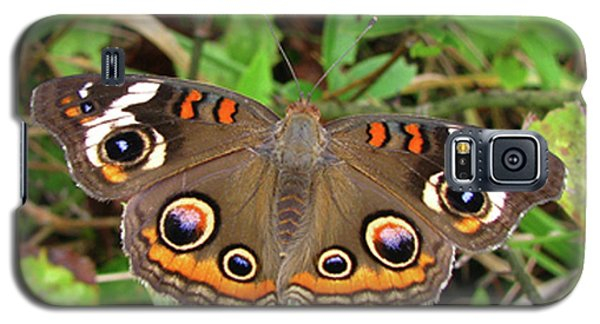 Galaxy S5 Case featuring the photograph Buckeye Butterfly by Donna Brown