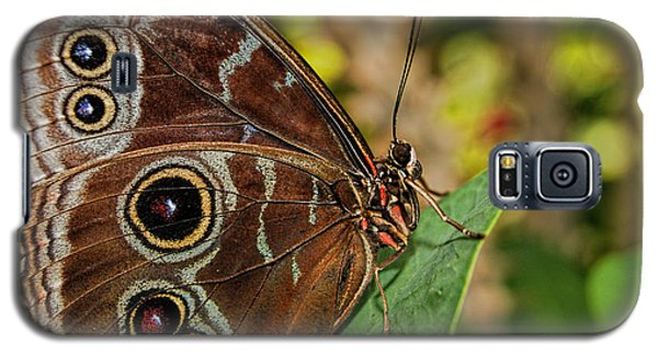 Galaxy S5 Case featuring the photograph Blue Morpho Butterfly by Olga Hamilton