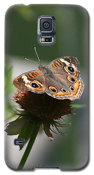 Buckeye Galaxy S5 Case by Karen Silvestri