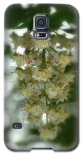 Buckeye Tree Bloom Galaxy S5 Case