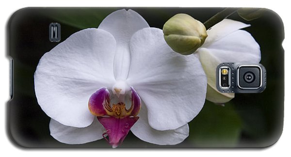 Galaxy S5 Case featuring the photograph Bud And Bloom II by Penny Lisowski