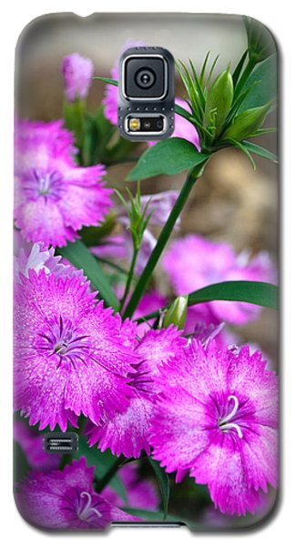 Buds And Blooms 1 Galaxy S5 Case