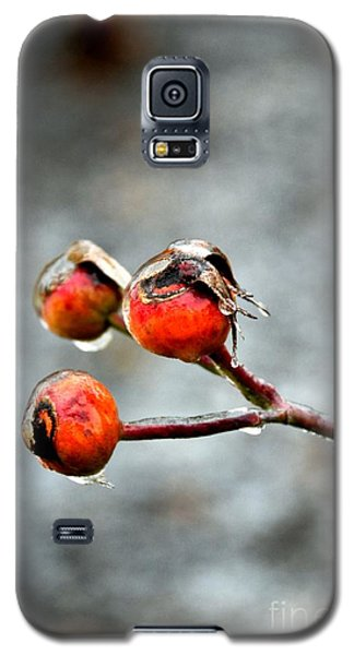 Buds On Ice Galaxy S5 Case by Bonnie Myszka