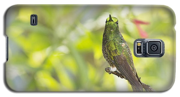 Galaxy S5 Case featuring the photograph Buff-tailed Coronet Hummingbird by Dan Suzio