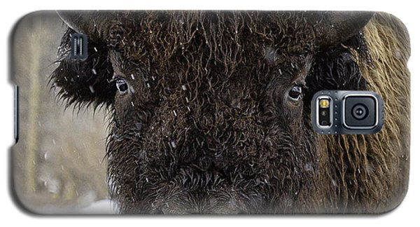 Galaxy S5 Case featuring the photograph Buffalao In Snow by Susi Stroud