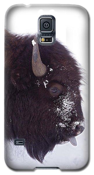 Buffalo In Snow   #6983 Galaxy S5 Case by J L Woody Wooden