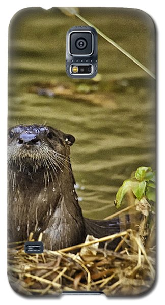 Buffalo National River Otter  Galaxy S5 Case