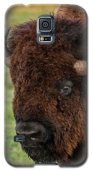 Galaxy S5 Case featuring the photograph Buffalo Portrait by Dawn Romine