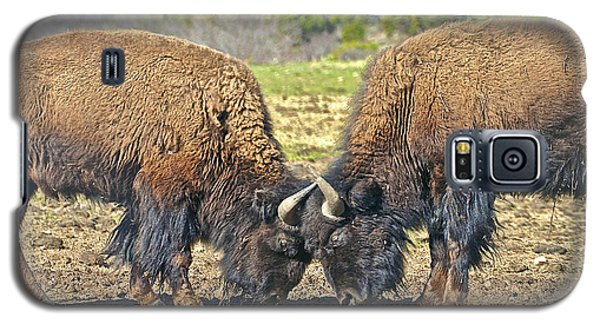 Buffaloes At Play Galaxy S5 Case