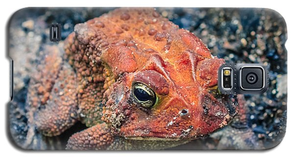 Galaxy S5 Case featuring the photograph Bufo Terrestris by Rob Sellers
