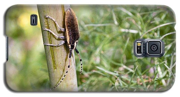 Bug Galaxy S5 Case