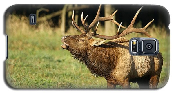 Bugleing Elk Galaxy S5 Case by Larry Bohlin