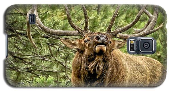 Bugling Bull Elk II Galaxy S5 Case