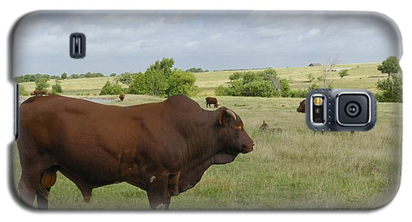 Galaxy S5 Case featuring the photograph Bull And Cattle by Charles Beeler