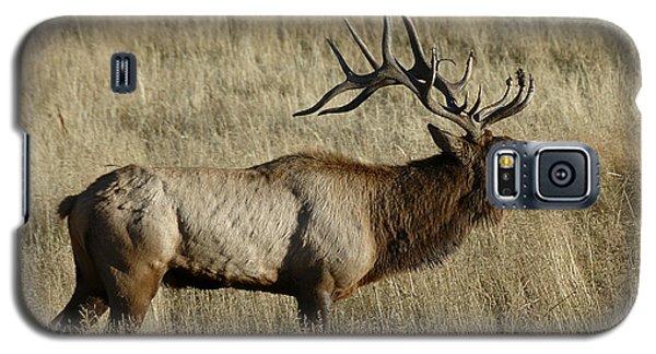 Bull Elk Bugling Galaxy S5 Case