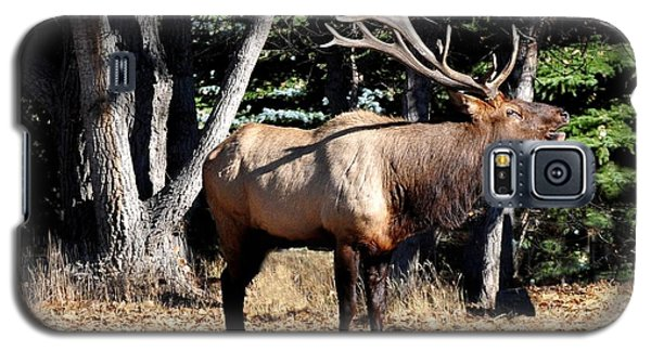 Bull Elk Bugling Galaxy S5 Case by Marilyn Burton