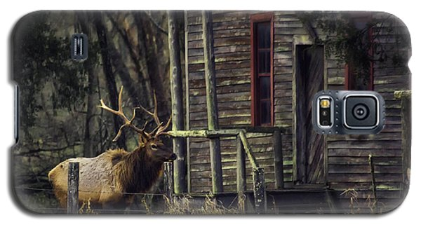 Bull Elk By The Old Boxley Mill Galaxy S5 Case