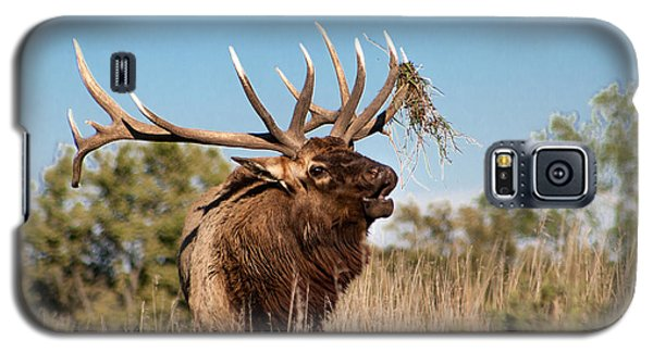 Bull Elk Call Galaxy S5 Case by Dawn Romine