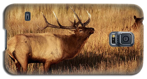 Galaxy S5 Case featuring the photograph Bull Elk by Clare VanderVeen