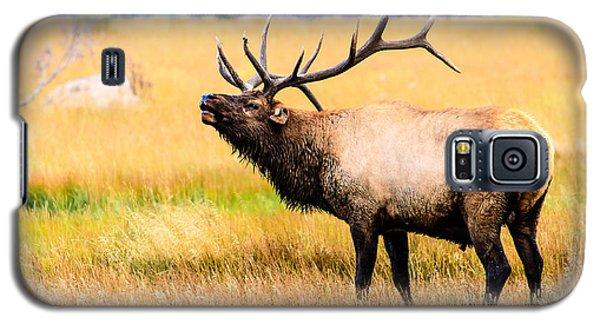 Bull Elk - Colorado Galaxy S5 Case