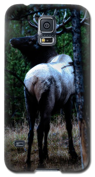 Bull Elk In Moonlight  Galaxy S5 Case