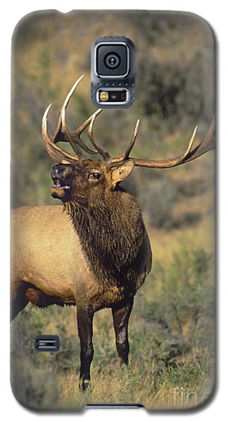 Bull Elk In Rut Bugling Yellowstone Wyoming Wildlife Galaxy S5 Case
