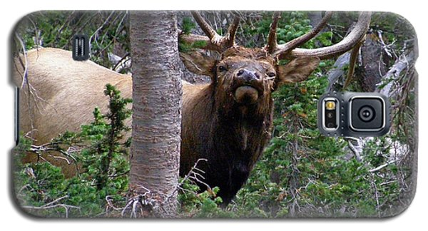 Bull Elk Looking At Me Galaxy S5 Case