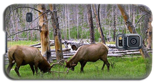 Bull Elk Sparing Galaxy S5 Case