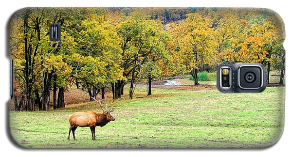 Galaxy S5 Case featuring the photograph Bull Elk by Wendy McKennon