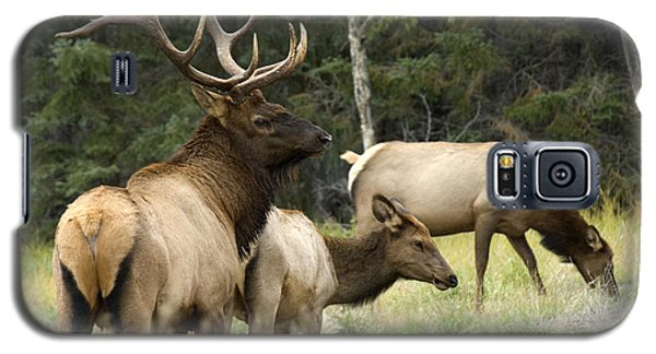 Bull Elk With His Harem Galaxy S5 Case