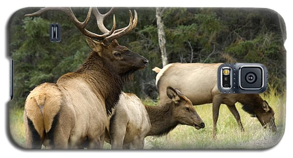 Bull Elk With His Harem Galaxy S5 Case by Bob Christopher