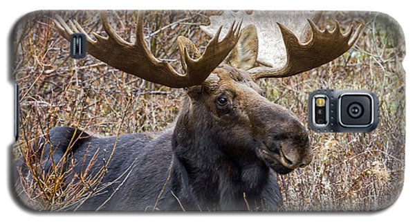 Bull Moose In Autumn Galaxy S5 Case by Jack Bell