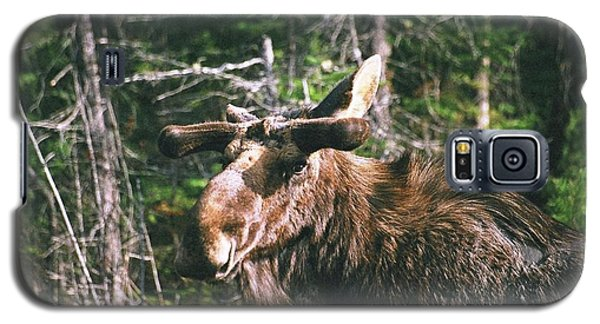 Bull Moose In Spring Galaxy S5 Case