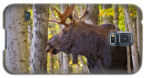 Bull Moose In The Birches Galaxy S5 Case
