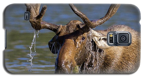 Bull Moose Sampling The Vegetation Galaxy S5 Case by Jack Bell