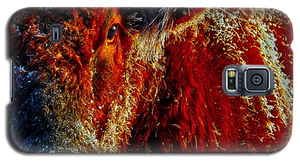 Galaxy S5 Case featuring the photograph Bull On Ice by Amanda Smith