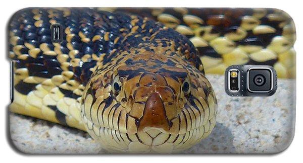 Bull Snake Stare Galaxy S5 Case