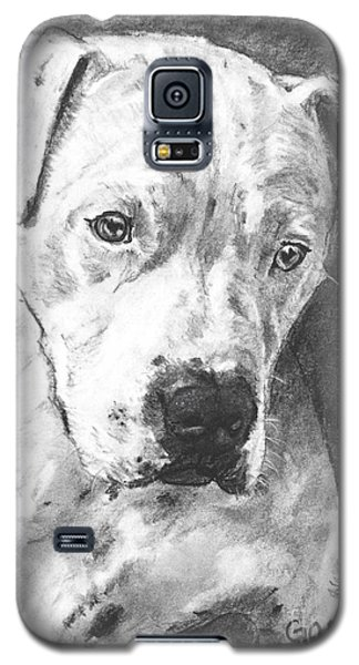Bull Terrier Sketch In Charcoal  Galaxy S5 Case