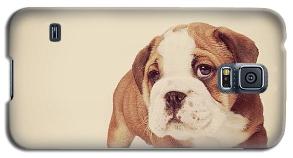 Bulldog Pup Galaxy S5 Case