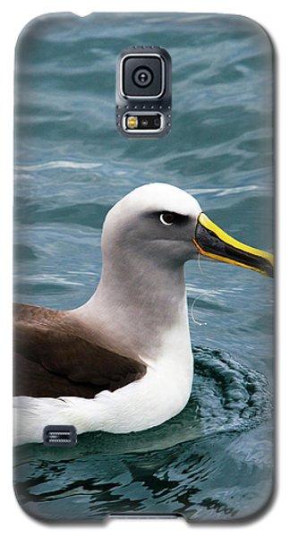 Buller's Albatross (thalassarche Bulleri Galaxy S5 Case by Micah Wright