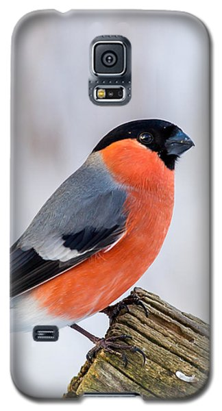 Bullfinch On The Edge Galaxy S5 Case