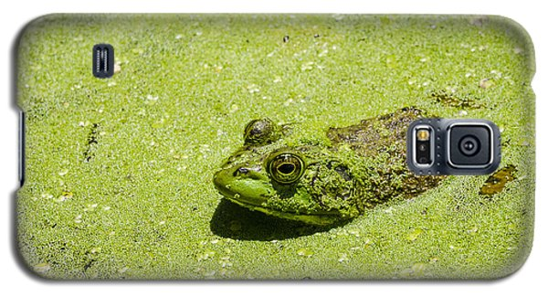 Bullfrog In Duckweed Galaxy S5 Case by Bradley Clay