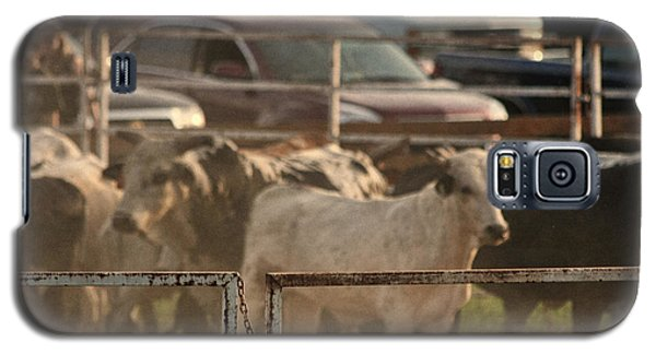 Galaxy S5 Case featuring the photograph Bulls by Denise Romano