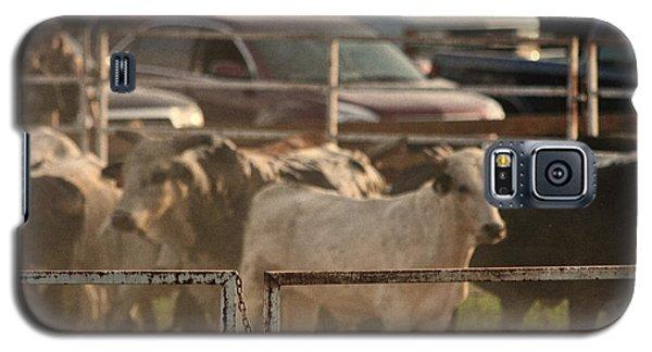 Bulls Galaxy S5 Case